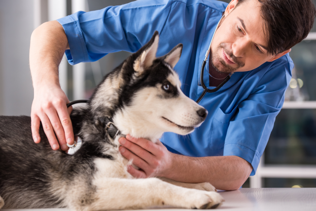 The Animalista - Dog receiving medical exam to help prevent pet diseases