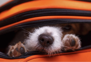 The Animalista Chicago Pet Friendly Hotels - Hotel Lincoln