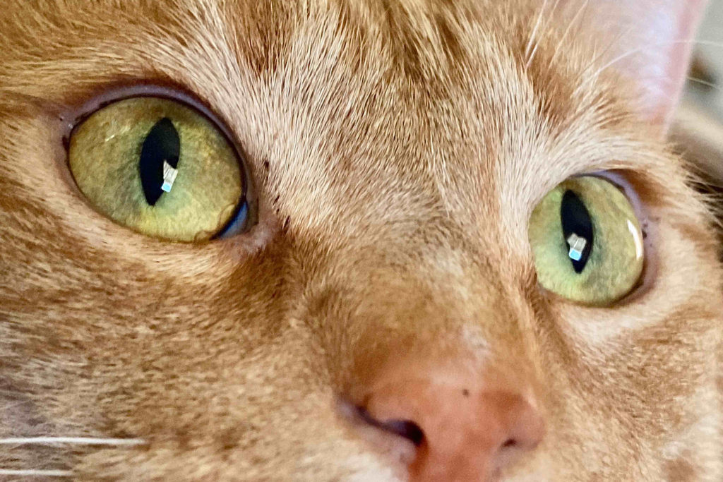 The Animalista Cat nasal condition treatment