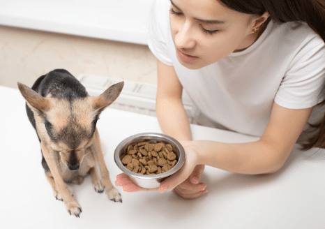 The Animalista dog refusing to eat due to medication side effects