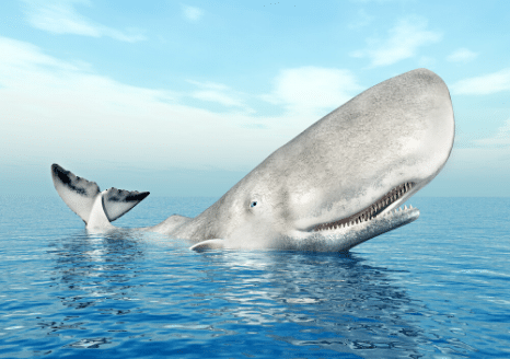 The Animalista sperm whale showing his massive head