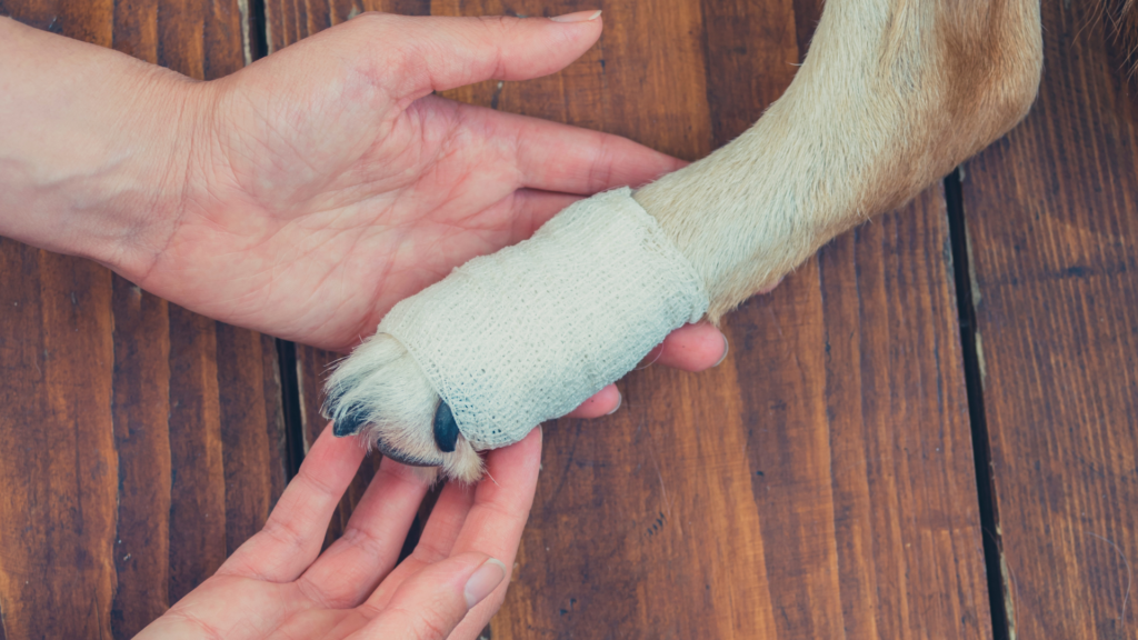 Treating a non-emergency limp on a dog at home