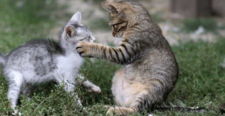 The Animalista Kittens Playing