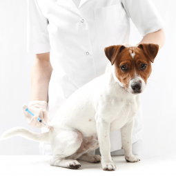 The-Animalista-Animal-Vitals-Pet-Flu-featured