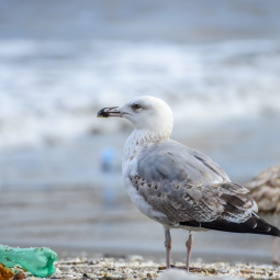 The-Animalista-Ocean-Life-July2019-Feature