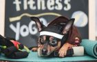 Fitness for dogs and cats featured image - Dog resting after an intense workout