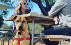 The Animalista Austin pet friendly restaurants