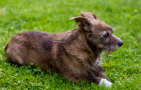 How To Treat A Limping Dog At Home