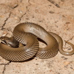 The Animalista do snakes have spines